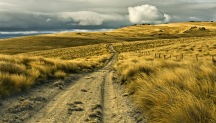 Track in the Tussock - Dunstan Range